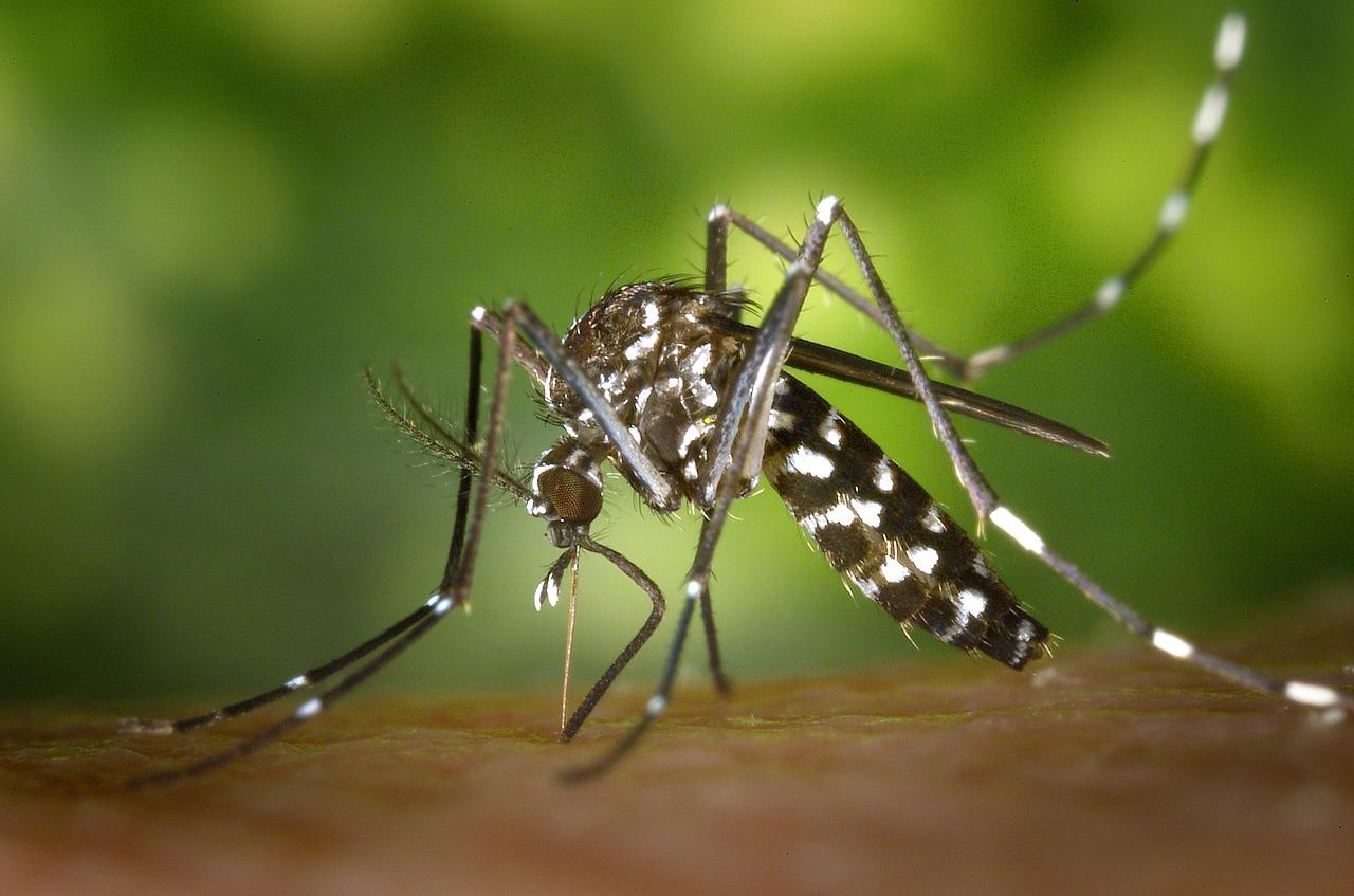 Zika-Mug reden voor annulering reis