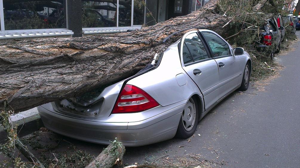 Aansprakelijk voor schade door gevallen boom.